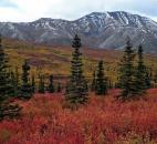 Nancy Caryer of Fort Wayne sent in this fall foliage photo of Denali National Park and Preserve in Alaska.