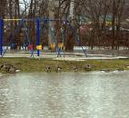 The rising waters of the St. Marys River turn the playground at Foster Park into a haven for water fowl Jan. 14. According to the National Weather Service, the St. Marys River was expected to crest near 16 feet because of the heavy rain.
