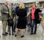 A pack of Great Danes and their handlers get a chance to socialize before showing Wednesday at the first day of the Old Fort Cluster Dog Shows.