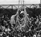 In this April 1, 1975 file photo, a cargo net lifts refugees from a barge onto the SS Pioneer Contender for evacuation from the fallen city of Da Nang, Vietnam. It took eight hours to load some 6,000 refugees aboard the ship. (AP Photo/Peter O'Loughlin, File)