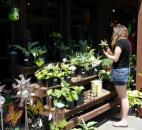 A visitor looks at the plants for sale at the gift shop of the Sarah P. Duke Gardens at Duke University in Durham, N.C.  (Photo by Lisa Esquivel Long of The News-Sentinel)