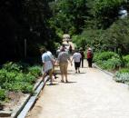 Visitors walk along the Walker Dllard Kirby Perennial Allee in the Sarah P. Duke Gardens in Durham, N.C.  (Photo by Lisa Esquivel Long of The News-Sentinel)