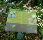 One of many educational markers in the H.L. Blomquist Garden of Native Plants at the Sarah P. Duke Gardens in Durham, N.C.  (Photo by Lisa Esquivel Long of The News-Sentinel)