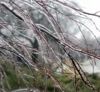 Icy buildup on branches around the Fort Wayne area was common due to the freezing rain which swept through the area Feb. 26. The temperatures were not quite cold enough to freeze the rain on the roads for most of the day. (Photo by Ellie Bogue of The News-Sentinel)