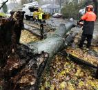 A worker clears a tree dropped by the high winds prior to landfall of Hurricane Sandy in Shrewsbury, Mass., on Monday.