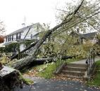 A large tree in Methuen, Mass., lays atop power lines this morning due to Monday's hybrid superstorm Sandy. Sandy, the storm that made landfall Monday, caused multiple fatalities, halted mass transit and cut power to more than 6 million homes and businesses.