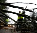 A worker cuts a downed tree that fell on a road Monday during the the early stages of Hurricane Sandy in Old Orchard Beach, Maine.
