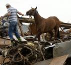 Rescuers recover a horse from the remains of a day care center and destroyed barns Monday. (Photo by The Associated Press)
