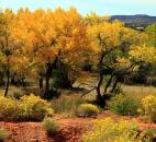 "Laura Hutsell said, ""My husband Steve and I stopped at the Walatowa Visitor Center (Pueblo of Jemez) in the Sante Fe National Forest, just north of Albuquerque, N.M., and just fell in love with this fall scene."