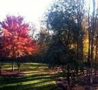 Jim Porter entered this photo taken in October at sunrise in their Aboite Township backyard.