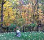 J. Brechbill entered this photo of beautiful fall foliage in cousin Mary Degler's backyard.