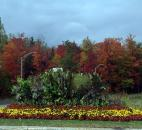 "Robert Albertson took this photo in October of fall flowers at entrance as they drove out through the beautiful fall colors of the trees in the north side of Quebec City, Quebec, in Canada. ""The best foliage in any part of the area of St. Lawrence Seaway,"" he said."