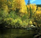 "Steve Hutsell entered this photo of ""a beautiful fall day spent on the Pecos River trout fishing (and, yes, I did catch one) in the Sante Fe National Forest in New Mexico."